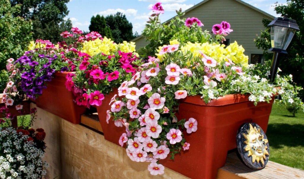 Saksı Çiçeği Hediye Etmek